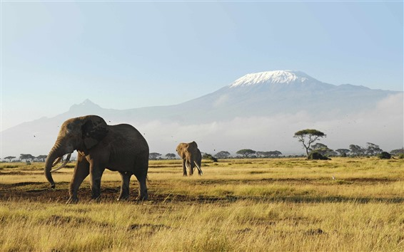 Wallpaper Elephants, grassland, trees, mountain