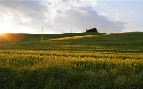Papéis de Parede Campos verdes, árvores, linhas de energia, luz do sol