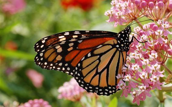壁紙 昆虫、蝶、ピンクの花、春