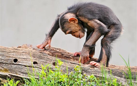 Fondos de pantalla Mono, madera, encuentra algo