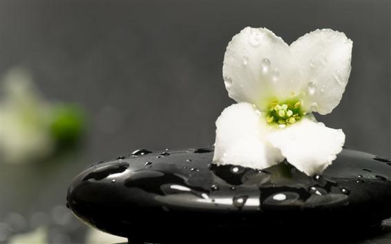 壁紙 1つの白い花、水滴、黒い石