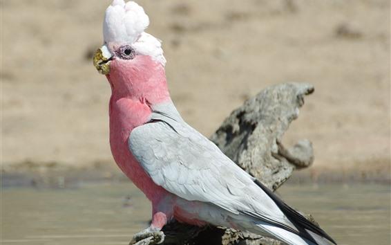 Обои Розовый перьевой попугай