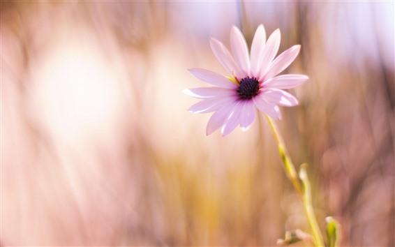 Papéis de Parede Close-up de flor rosa, pétalas, caule, fundo nebuloso