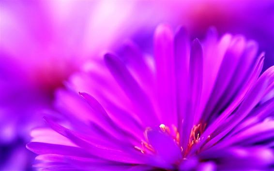 Wallpaper Purple petals close-up, flower macro photography