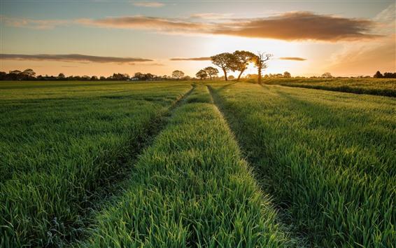 壁紙 夏、緑の野原、木、日の出