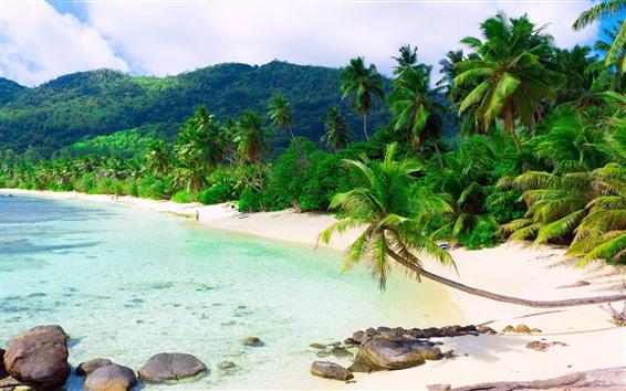Wallpaper Tropical, beach, palm trees, sea, resort