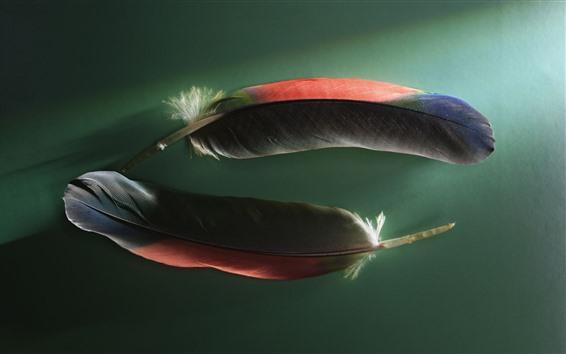 Обои Два красочных пера, зеленый фон
