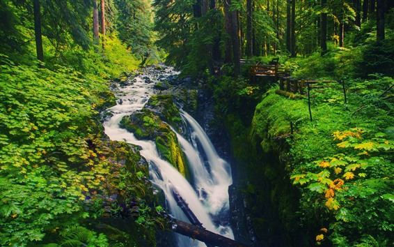 Wallpaper Waterfall, trees, green, forest