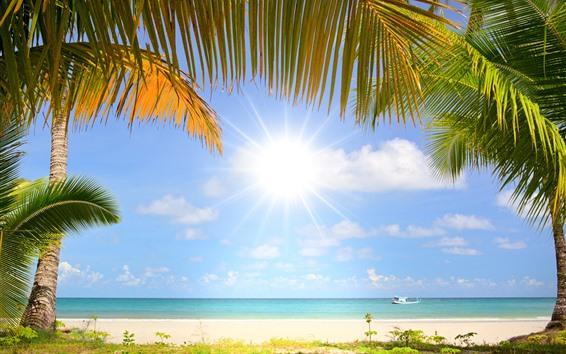 Fond d'écran Plage, palmiers, soleil, bateau, mer