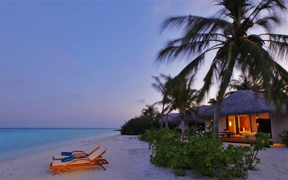 桌布 海灘,大海,棕櫚樹,度假村,燈光,黃昏