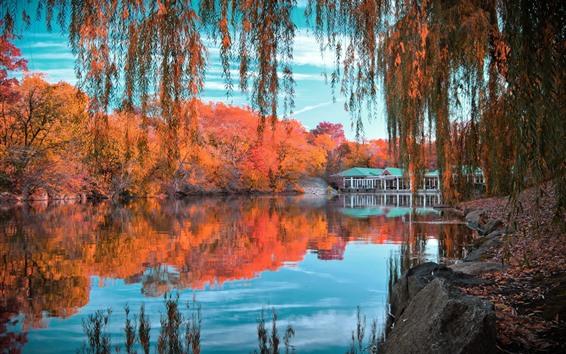 壁紙 美しい秋、公園、池、柳、木々