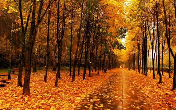 Papéis de Parede Belo parque no outono, folhas de bordo amarelas, árvores, estrada molhada