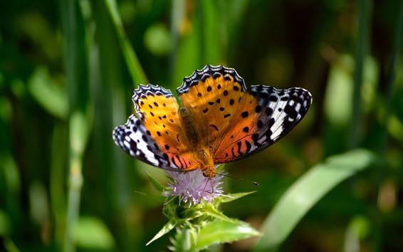Papéis de Parede Borboleta, inseto, asas, mancha, flor rosa