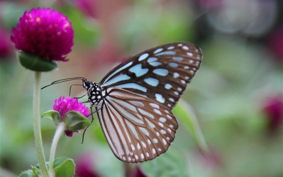 Papéis de Parede Borboleta, asas, flores de trevo rosa