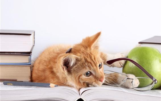 Papéis de Parede Gato, livro, óculos, maçã