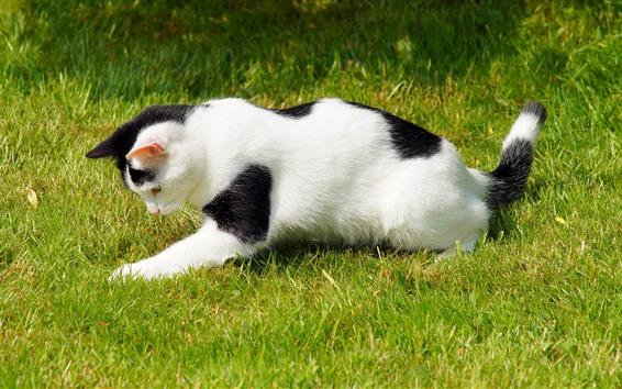 Обои Кошка игривая на траве