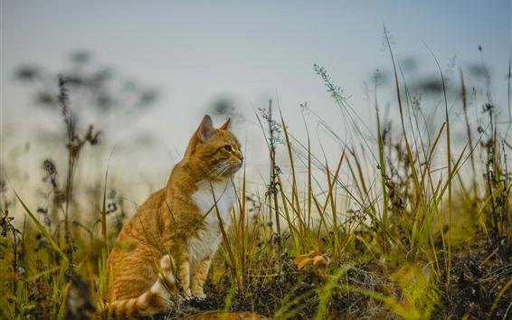 Papéis de Parede Gato sentado no chão, grama, natureza