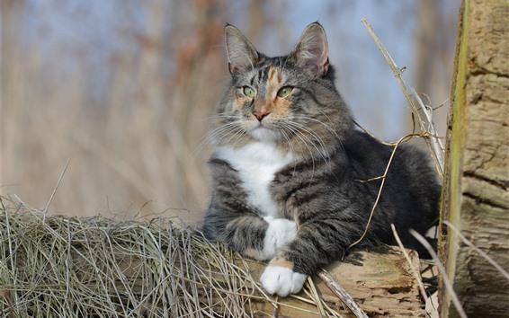 Wallpaper Cat, wood, look, dry grass