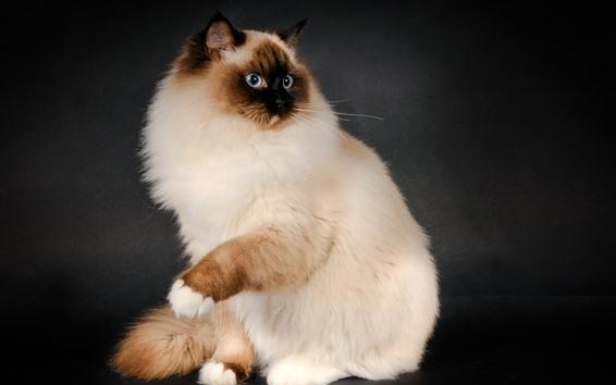 Wallpaper Cute cat, fluffy, pose