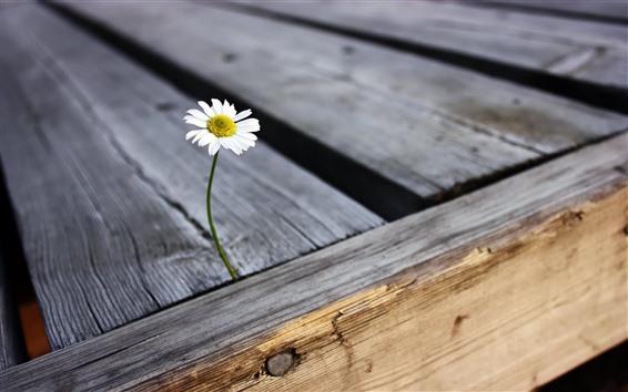 Papéis de Parede Margarida, flor, pétalas, madeira