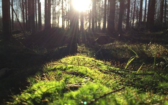 Wallpaper Forest, moss, green, sun rays, glare