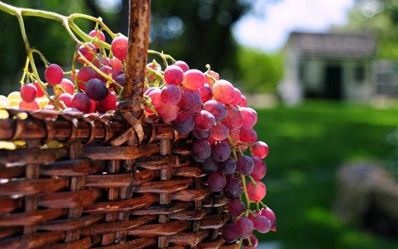 Papéis de Parede Uvas vermelhas frescas, cesta, frutas