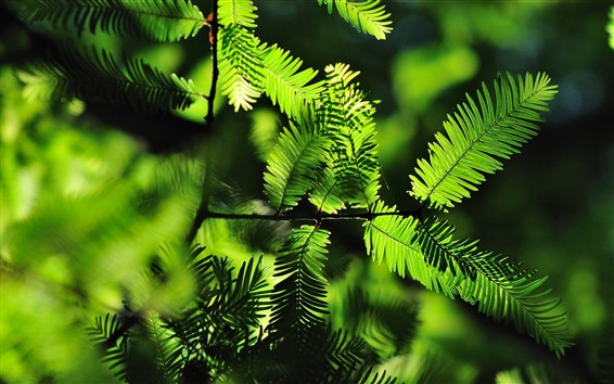 Wallpaper Green fern leaves, backlight