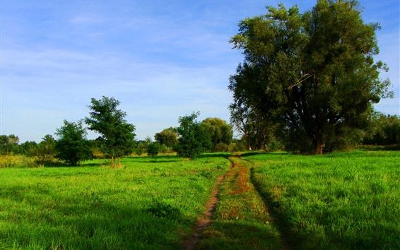 Wallpaper Green field, trees, path, nature scenery