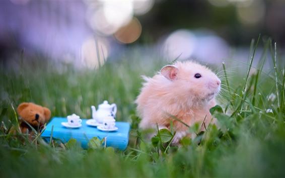 Papéis de Parede Hamster, chá, grama, animais engraçados
