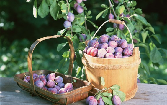 Wallpaper Harvest, purple plums, fruit