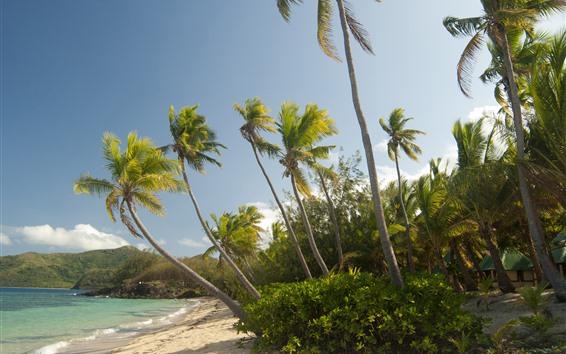 壁紙 モルディブ、ヤシの木、ビーチ、海、熱帯