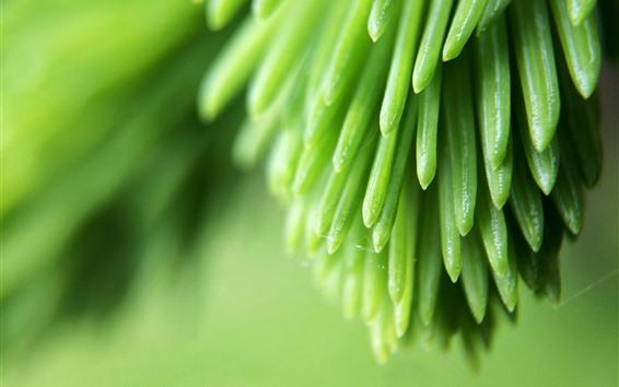 壁紙 パイングリーンの葉のマクロ撮影