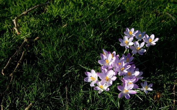 Papéis de Parede Orquídea rosa, flores, grama verde