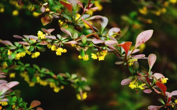 壁紙 植物、赤い葉、黄色い花