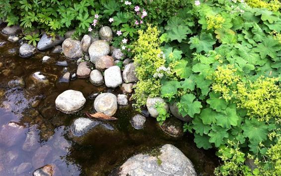 Papéis de Parede Poça, água, pedras, folhas verdes, flores