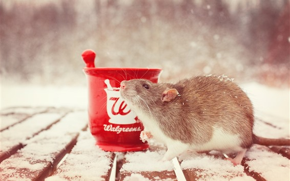 Papéis de Parede Rato, neve, copo, inverno