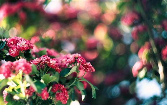 壁紙 赤い花が咲き、明るい円、かすんでいる