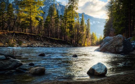 배경 화면 강, 바위, 나무, 가을, 햇빛