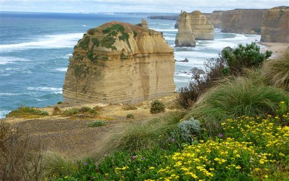 壁紙 海、岩、草、野花、黄色い花