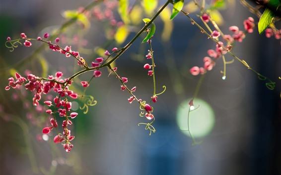 壁紙 春、赤い花が咲く、小枝、かすんでいる背景