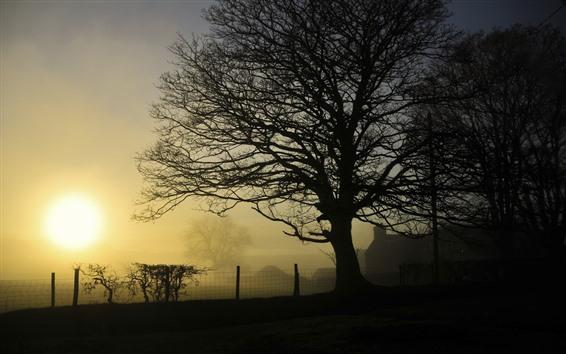 Papéis de Parede Árvores, cerca, vila, nascer do sol, nevoeiro, manhã