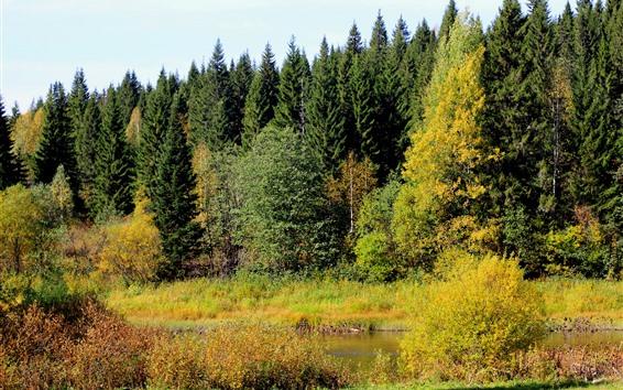 Papéis de Parede Árvores, floresta, rio, outono, cenário natural