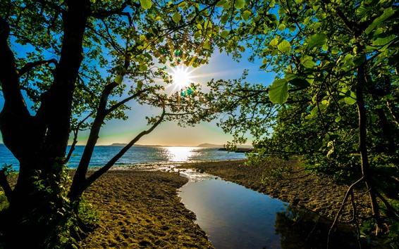 Fond d'écran Arbres, feuilles vertes, mer, rayons du soleil