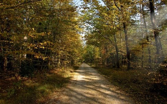 Hintergrundbilder Bäume, Weg, Herbst, Sonnenstrahlen