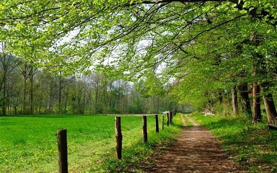 Papéis de Parede Árvores, caminho, cerca, campos, verde