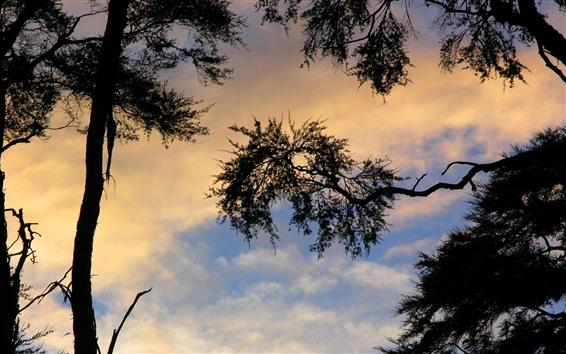 Wallpaper Trees, sky, silhouette