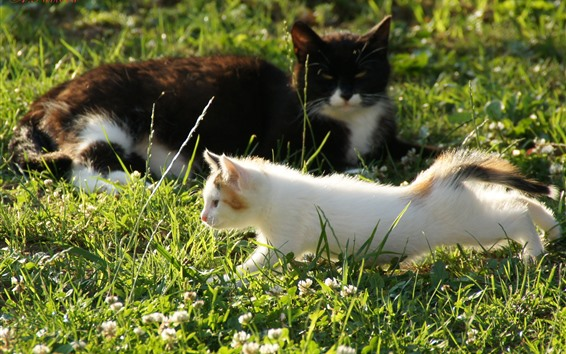 Wallpaper Two cats, grass, sunshine