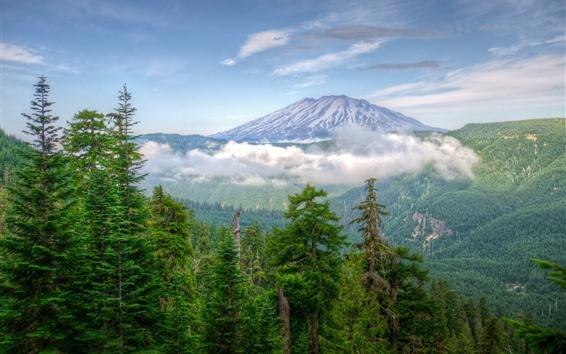 Hintergrundbilder Washington, USA, Berge, Bäume, Schnee, Wolken, Natur