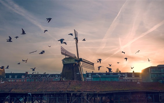 Wallpaper Windmill, birds, sunset, city