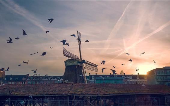 Fond d'écran Moulin à vent, oiseaux, coucher de soleil, ville